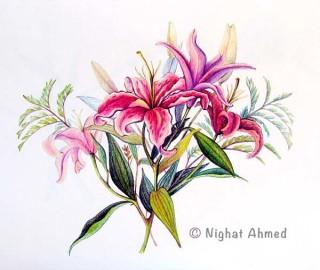 Lillies Study